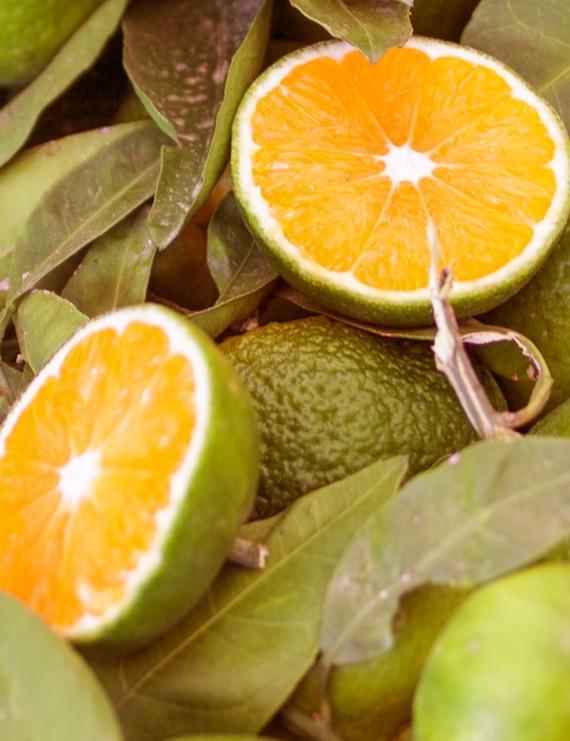 Profumo di Mandarino verde
